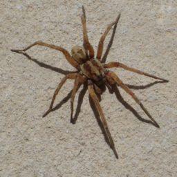 Уничтожение пауков в Стерлитамаке